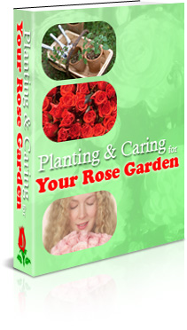 Planting And Caring For Your Rose Garden cover graphic